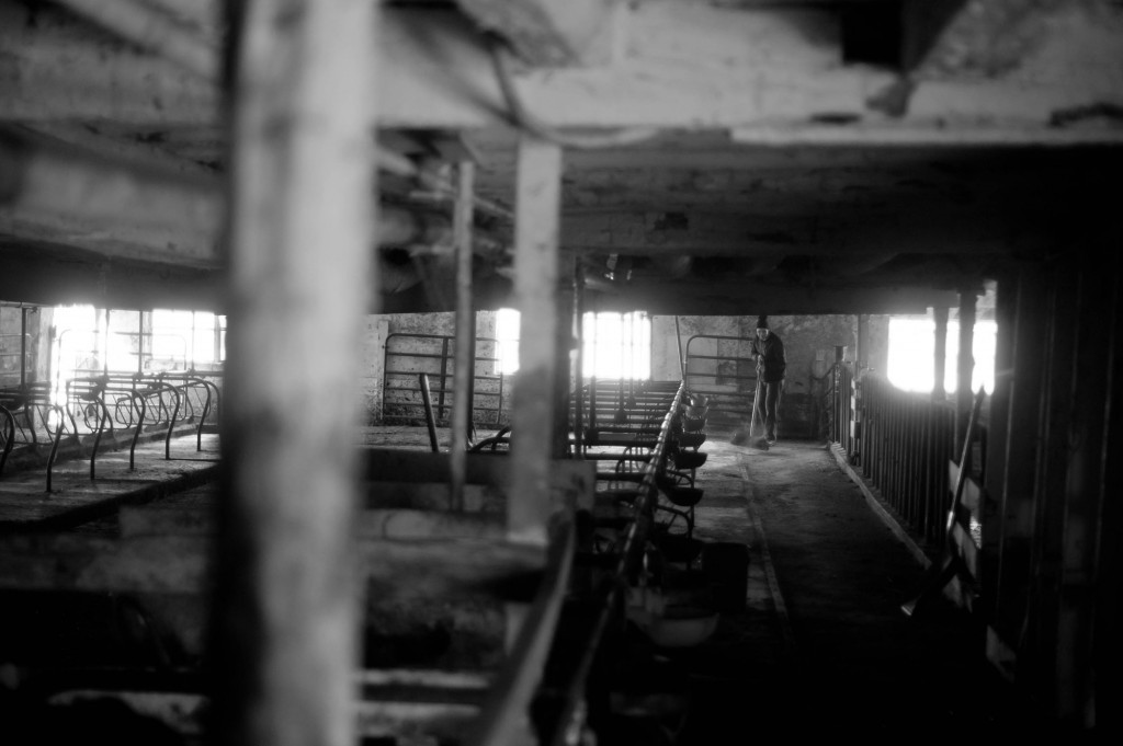 zw_AmishFamily08