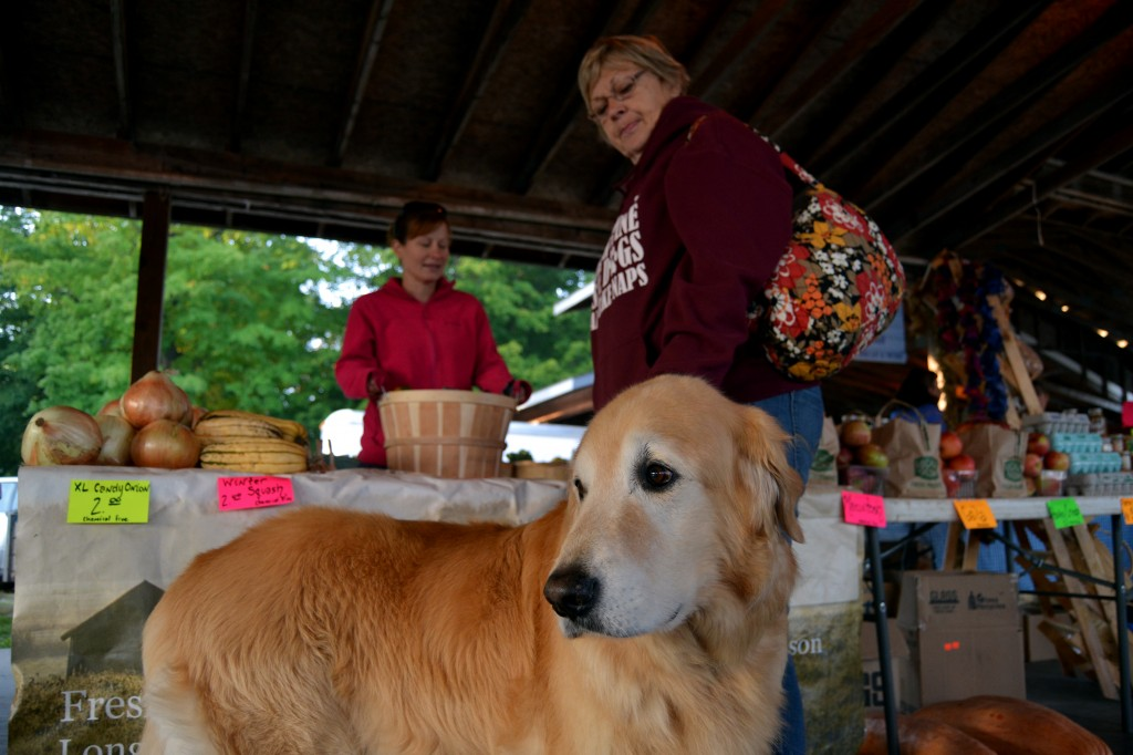 Boomer, a therapy dog, joins his owner, Margy Riemer, at the Mount Pleasant Farmers' Market on the morning of Sept. 25, 2014. Boomer has been a therapy dog for nine years. (Photo | Andrea Henk)