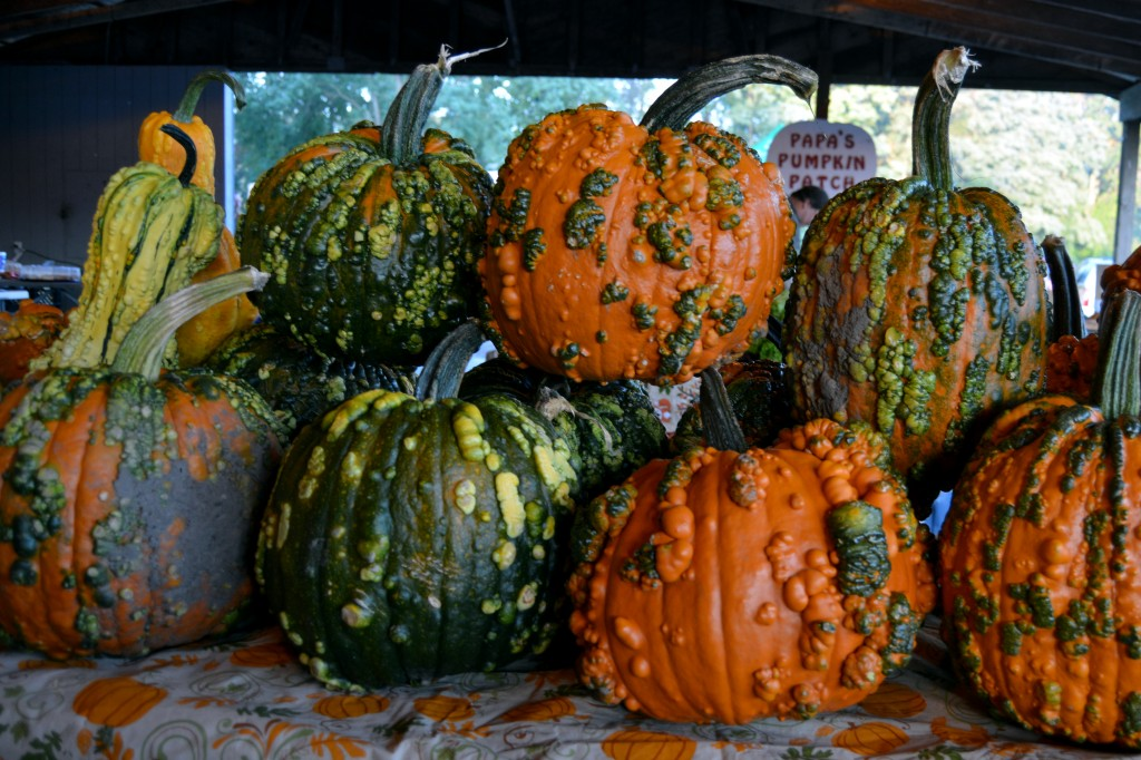 Pumpkins come in all shapes, sizes, and colors at the Mount Pleasant Farmers' Market at Island Park on Sept. 25, 2014. (Photo | Andrea Henk)