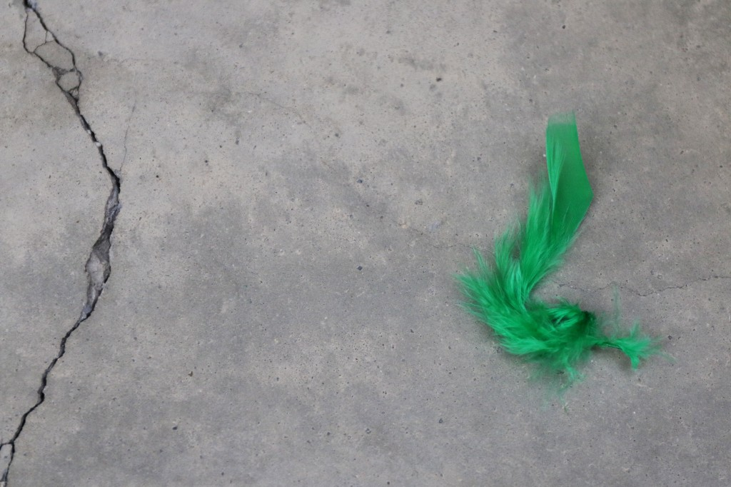 A lonely green feather rests in the Music Building of CMU. (Photo I Kaiti Chritz)