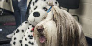 "Puppy Palooza ""Retrieves""  Student Crowd"